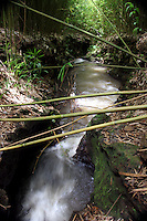 The Bamboo laying across a creek in Maui on a hike off the Road to Hana.