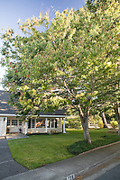 California home with deciduous shade tree in front yard, Ash tree (Fraxinus)
