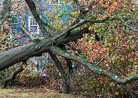 Hurricane Sandy tree damage, Moorestown, New Jersey, USA