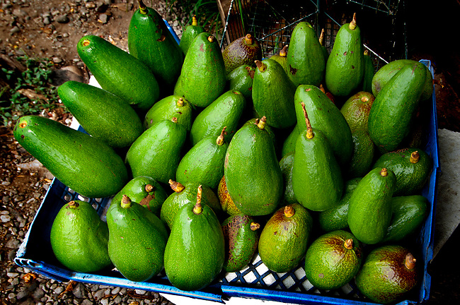 Costa Rica, Caldera, Pacific Coast, Fruit Stand, Avocado