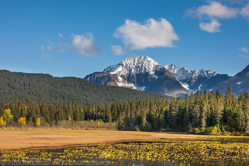 Fresh snow on the Kenai Mountains, lilies in Bear lake, Chugach National Forest, Kenai Peninsula, southcentral, Alaska.