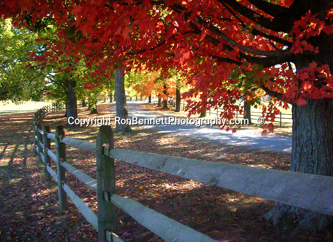 Red autumn leaves with split rail fence on windy road Oatlands Plantation Commonwealth of Virginia,Autumn, leaf, leaves, autumn leaves, Oatlands Plantation,