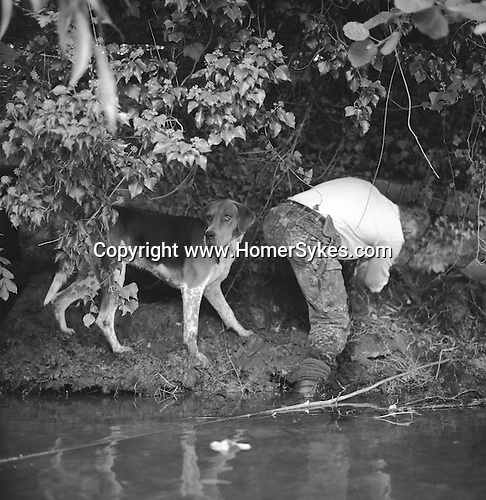 The Valley Minkhounds..The quarry has escaped into a broken culvert. River Enborne, near Aldermaston, Berkshire...Hunting with Hounds / Mansion Editions (isbn 0-9542233-1-4) copyright Homer Sykes. +44 (0) 20-8542-7083. < www.mansioneditions.com >