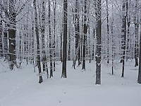 FOREST_LOCATION_90167