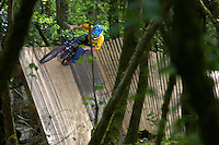 "Darren Berrecloth  ""Bearclaw""  ..Ashams Quarry , near Frome, Somerset .   May 2007..pic copyright Steve Behr / Stockfile"