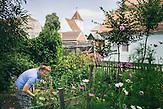 Hermine Jinga-Roth erntet in ihrem Garten Gurken. Europa, Rumaenien, Rusciori den 29. Juli 2015