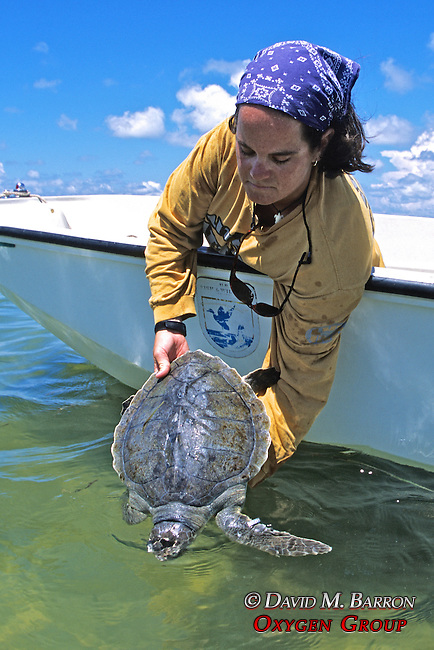 Erin Mcmichael Releasing Green Turtle