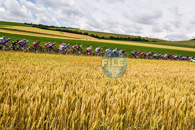 The peleton pass through rural landscape near Bemont during Stage 4 of the 2014 Tour de France running 163.5km from Le Touquet to Lille. 8th July 2014.<br /> Picture:Thomas van Bracht/Peloton Photos/www.newsfile.ie