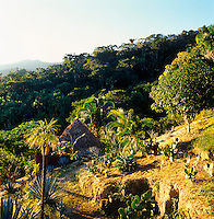 Cactus and palm trees litter the hillside above the thatched roof of a guest house and jungle beyond.