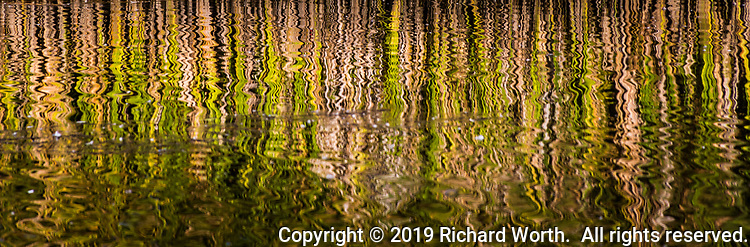 Cattail grass relects green and brown in the rippling water of a neighborhood park near San Francisco Bay.