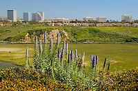 Fashion Island from accross the Back Bay, Newport Beach, California