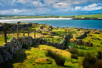 Stone fence and Dog's Bay Beach, Ireland. County Galway, Connemara