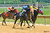 Fairy Cat winning at Delaware Park on 7/25/16