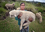 Elvira Mauricio carries one of her sheep on a hillside in San Luis, a small Mam-speaking Maya village in Comitancillo, Guatemala. Women in the community have worked together on several agricultural and animal raising projects with help from the Maya Mam Association for Investigation and Development (AMMID).