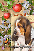 Isabella, REALISTIC ANIMALS, REALISTISCHE TIERE, ANIMALES REALISTICOS, paintings+++++,ITKE066174-L,#a#, EVERYDAY ,dogs