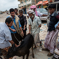 Dec. 28, 2014 - Socotra, Yemen. Market vendors sell a calf at the Hadibo meat markets. Habido is the capital of the island and the majority of the population live nearby, the district is home to some 30 000 of the islands population of 50 000.   © Nicolas Axelrod / Ruom