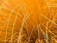 A shallow depth of field gives a different perspective on dry grass