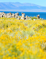 Sept. 5, 2010 - Mono Lake, California, U.S. - Tufa towers are seen along the shore of Mono Lake near Lee Vining, California with the towering Sierra Mountain range in the background. Mono Lake is a majestic body of water covering about 70 square miles. It is an ancient lake, over 1 million years old -- one of the oldest lakes in North America. It has no outlet and no fish; instead it is home to trillions of brine shrimp and alkali flies. (Photo by Alan Greth/ZUMA Press)