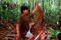 Índio Werekena, morador da comunidade de Anamoim no alto rio Xié, alisa as fibras da árvore de piaçaba (Leopoldínia píassaba Wall),antes de cortá-la. A  árvore que normalmente aloja os mais variados tipos de insetos representando um grande risco aos índios durante sua coleta . A fibra  um dos principais produtos geradores de renda na região é  coletada de forma rudimentar. Até hoje é utilizada na fabricação de cordas para embarcações, chapéus, artesanato e principalmente vassouras, que são vendidas em várias regiões do país.<br />Alto rio Xié, fronteira do Brasil com a Venezuela a cerca de 1.000Km oeste de Manaus.<br />06/06/2002.<br />Foto: Paulo Santos/Interfoto Expedição Werekena do Xié<br /> <br /> Os índios Baré e Werekena (ou Warekena) vivem principalmente ao longo do Rio Xié e alto curso do Rio Negro, para onde grande parte deles migrou compulsoriamente em razão do contato com os não-índios, cuja história foi marcada pela violência e a exploração do trabalho extrativista. Oriundos da família lingüística aruak, hoje falam uma língua franca, o nheengatu, difundida pelos carmelitas no período colonial. Integram a área cultural conhecida como Noroeste Amazônico. (ISA)