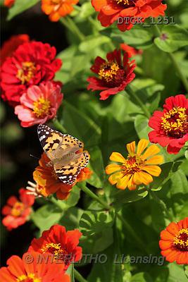 Gisela, FLOWERS, photos(DTGK1251,#F#) Blumen, flores, retrato