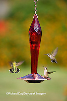 01162-12704 Ruby-throated Hummingbirds (Archilochus colubris) at feeder near flower garden,  Marion Co.  IL