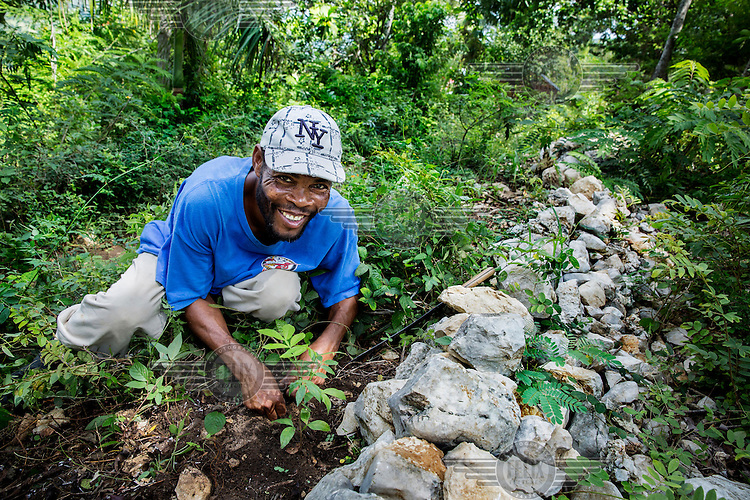 Jacques Antoine, 48 years old (blue shirt), tends to his fruit tree saplings on one of his plots in the mountains. Because wood is the main energy source in Haiti, the country is suffering from deforestation. Jacques is receiving aid from the Belgian NGO Protos in order to plant fruit trees and construct stone walls to combat erosion and deforestation. These trees will not only give him fruits which he can sell on the local market but the trees will also protect his land.