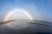 A kodiak grizzly bear (Ursus arctos middendorffi) and a foggy rainbow, Hallo Bay