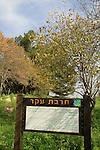 Israel, Upper Galilee, Hurvat Eker in Naftali Mountains forest