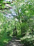 Ireland, rural, rustic, cliffs, bullrushes, oak trees, scenic, walk, trek, stone cottage, sea, crashing waves, primeval forest, woodland, greenery, path, railing, light rays, Ireland, Cliffs of Moher