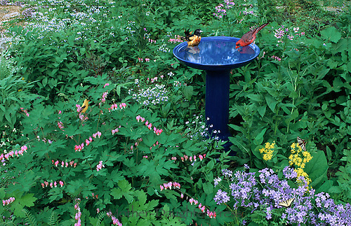 Birds At Blue Ceramic Bird Bath In Garden. Blooming Flowers With Oriole,  Cardinal,