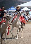 From left, Van Tieu and Wendy Damonte compete in a media exhibition race at the 56th annual International Camel &amp; Ostrich Races in Virginia City, Nev. on Friday, Sept. 11, 2015. <br /> Photo by Cathleen Allison