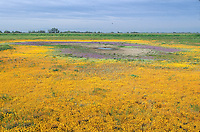 California vernal pool;  San Joaquin Valley; Merced County