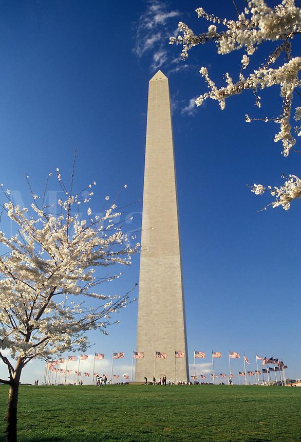 AJ2576, Washington Monument, Washington, DC, District of Columbia, capital city, Washington Monument in the spring in Washington, D.C.