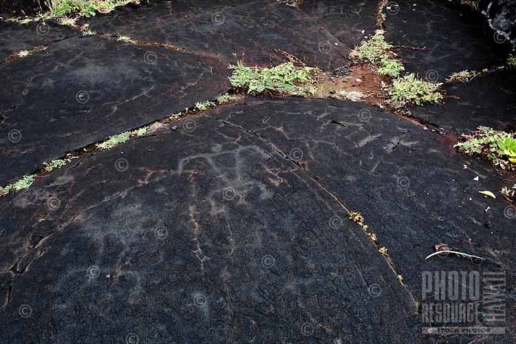 Human figure Hawaiian petroglyphs, Punalu'u Beach Park, Big Island.