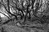 Northern Rata Forest
