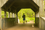Devil's Hopyard State Park, East Haddam, CT. Covered Bridge over Eight Mile River.Man walking dog.