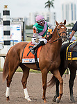 HALLANDALE BEACH, FL - March 31: Hofburg, #7, parades onto the track with Jose Ortiz in the irons for Trainer Bill Mott for the Grade I Xpressbet Florida Derby at Gulfstream Park on March 31, 2018 in Hallandale Beach, FL. (Photo by Carson Dennis/Eclipse Sportswire/Getty Images.)