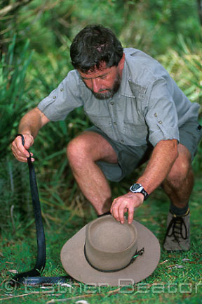Herpatologist, author and photographer Ken Griffiths subduing a wild Red-bellied Black Snake with his hat. Royal National Park, NSW