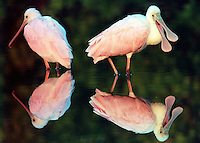 Wading Birds by Brian Cleary