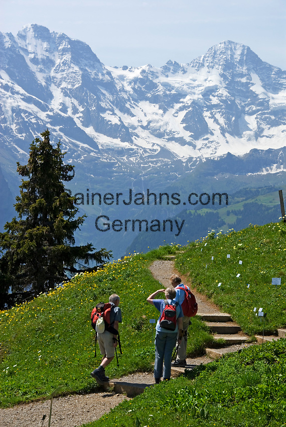 CHE, SCHWEIZ, Kanton Bern, Berner Oberland, Schynige Platte: beliebtes Wandergebiet oberhalb von Interlaken - 3 Wanderer vorm Breithorn (3.782 m) | CHE, Switzerland, Bern Canton, Bernese Oberland, Schynige Platte: popular hiking area above Interlaken- 3 hikers and Breithorn mountain (12.409 ft.)