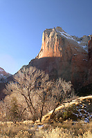 Cliffs of Abraham Mountain above cottonwood trees, Zion National Park, Washington County, UT