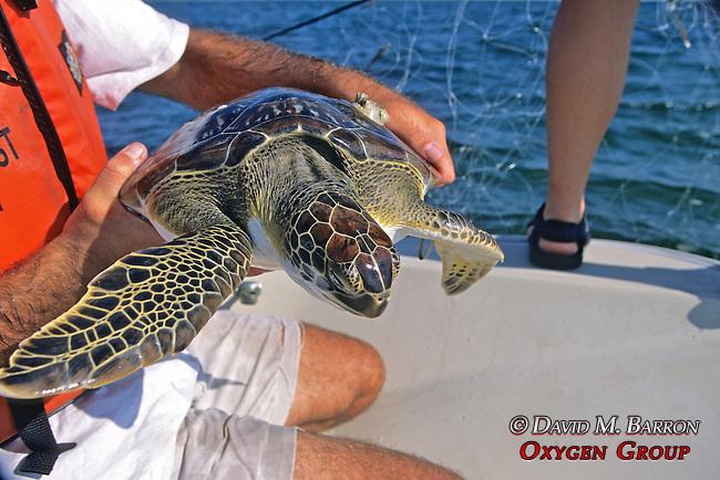 James Buehler W/ Green Turtle