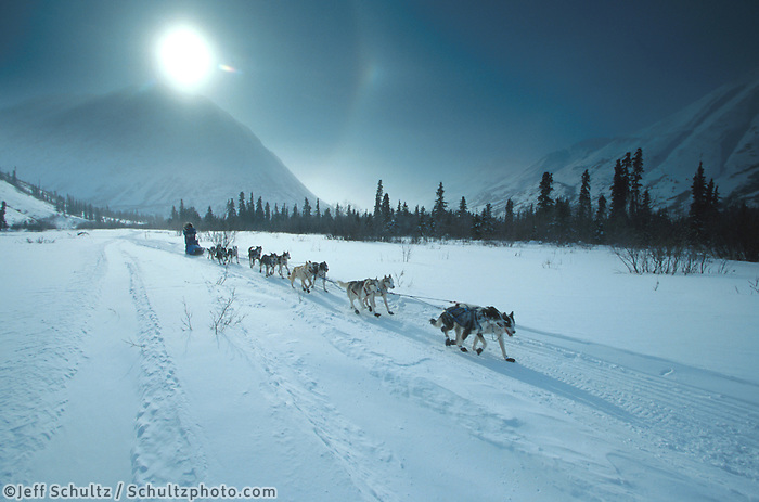 R Redington Mushing in Rainy Pass Iditarod 99 AK