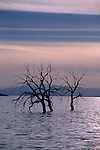 Lake near Obsidian Mountain, Salton Sea, California; tree silhouetted in sunset light