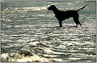 A dog is silhouetted as it stands in the ocean on Sullivan's Island, near Charleston, SC.