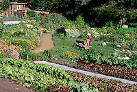 Conference attendee enjoys the organic flower and vegetable garden - Esalen Institute - Big Sur, California