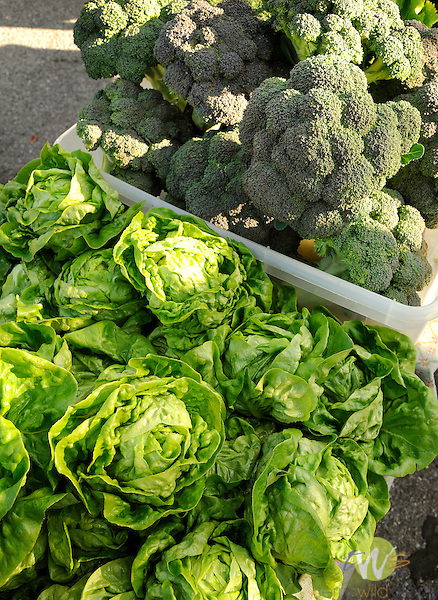 Williamsport Outdoor Growers Market. Anne Nordell, Beech Grove Farm, Trout Run, PA. Organic produce.  Broccoli and Boston lettuce.