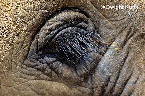 MA36-001z  African Elephant - close-up of eye - Loxodonta africana