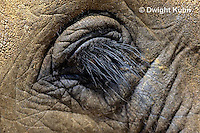 MA36-001z  African Elephant - close-up of eye - Loxodonta africana