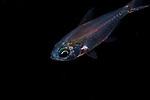 Fish ID Plz 9-3-18-9340